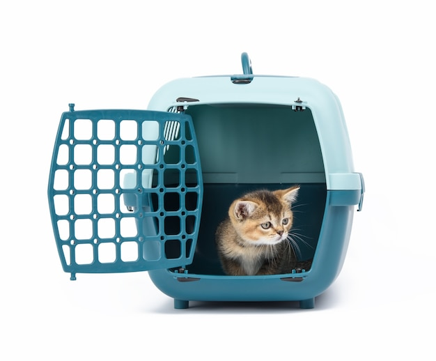 Large plastic carrier cage for cats and dogs on white background, inside a kitten is a scottish straight
