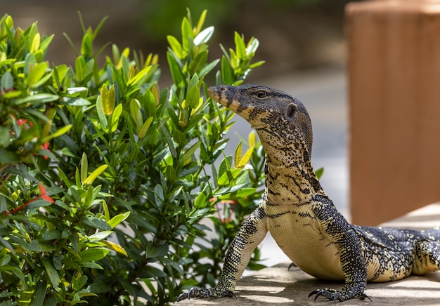 Большая рептилия возле растения крупным планом