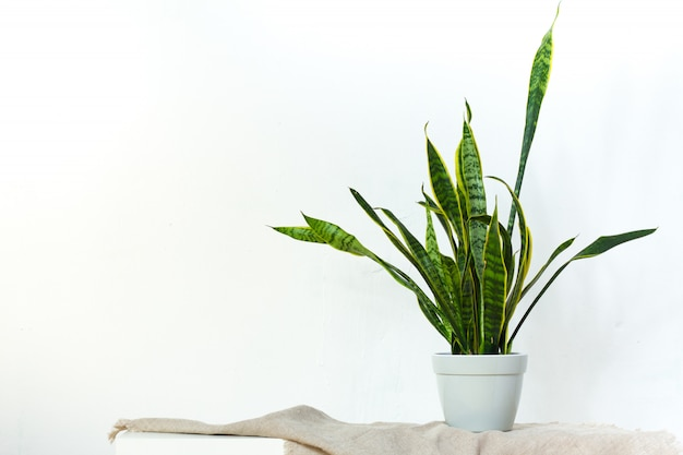 A large sansevieria plant in a light gray pot stands on natural fabric on white console opposite the white textural wall