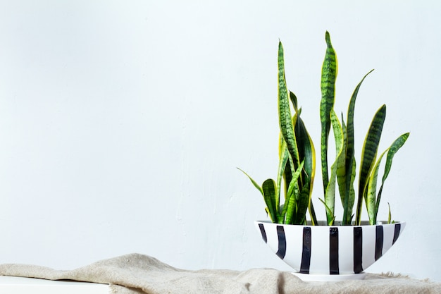 A large sansevieria plant in a long black white pot stands on natural fabric on white console opposite the white textural wall