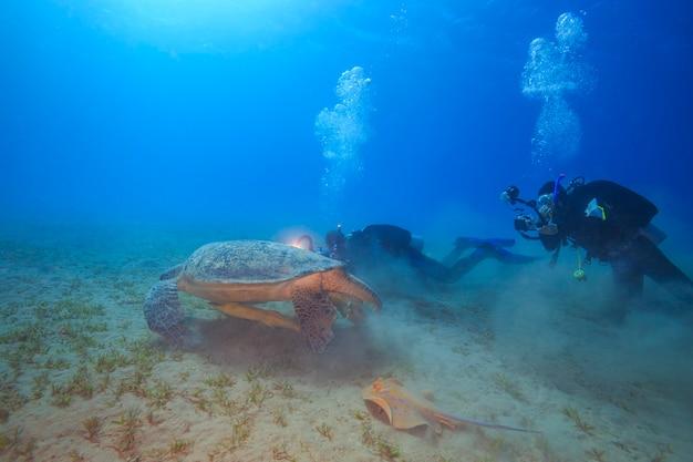 홍해의 큰 바다거북