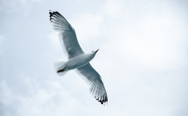 A large seagull against a cloudy sky