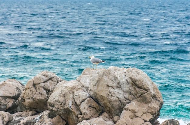 Большие чайки сидят на огромных прибрежных камнях