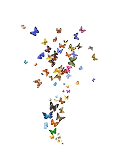 A large set of flower-shaped butterflies is isolated against a white background. tropical moths. high quality photo