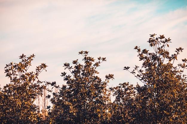 Большие силуэты деревьев на фоне неба