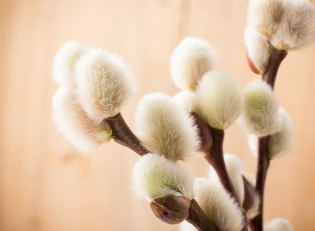大きくて柔らかいイースター尾状花序
