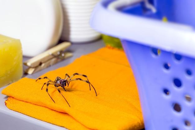 洗濯物の中に隠された大きなクモ、害虫問題の概念、咬傷の危険性