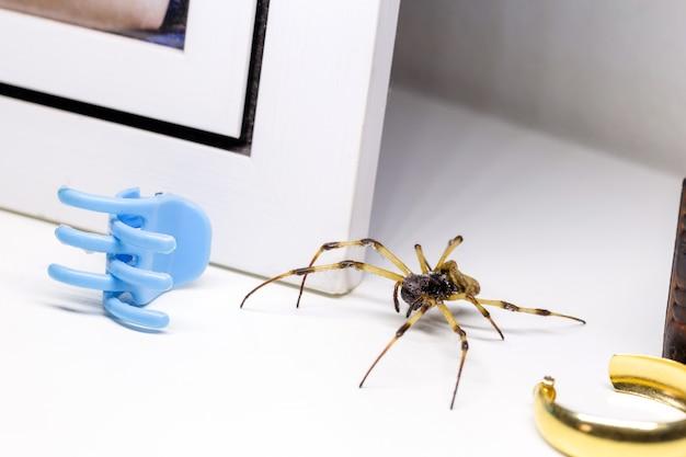 屋内に隠された大きなクモ、毒動物、クモ恐怖症の概念