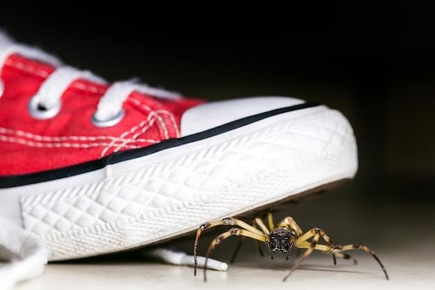 子供用スニーカー、毒動物、クモ恐怖症の概念、害虫駆除の中に隠された大きなクモ
