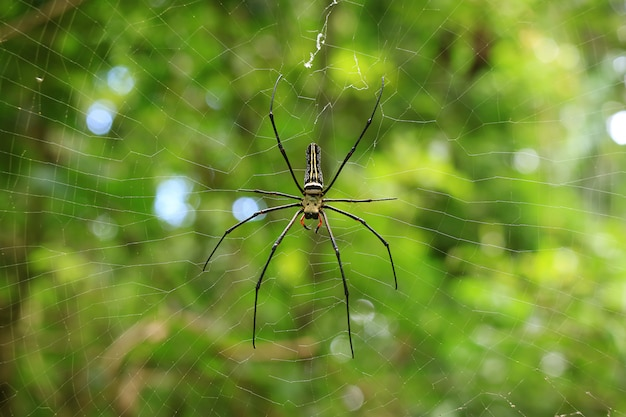 Large spider on its web in the national park of saraburi province, thailand