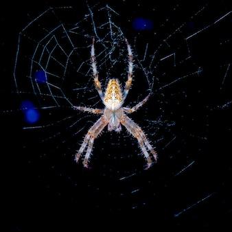 Большой паук в сети ночью