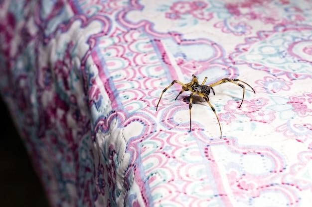 ベッドキルト、毒動物、検出の必要性を横切って歩く大きなクモ