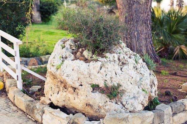緑の芝生にある大きな石は、自信と静けさの象徴です。