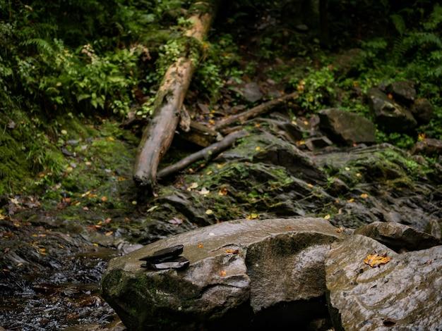 森の中の大きな石、その隣には川が流れ、伐採された木があります