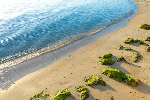 Крупные камни, поросшие зелеными водорослями на песчаном пляже у океана. природа тропиков.