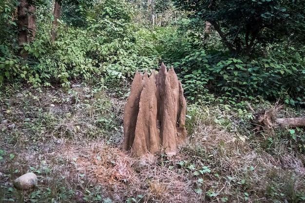 インド、カナ国立公園の森にある大きなシロアリ塚