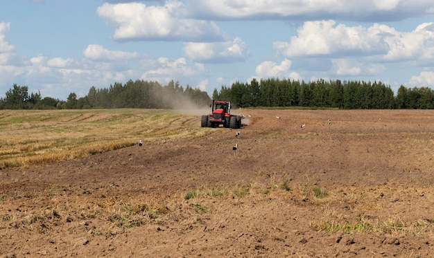 Large tractor with a plow plows the soil on the field after harvesting, for sowing a new crop of agricultural plants, white storks stand on the field searching for food