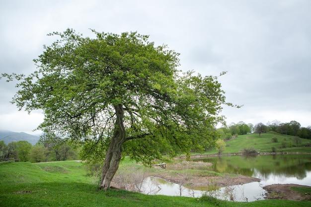 湖のほとりの大きな木