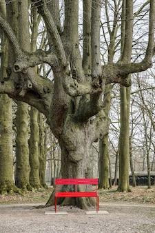 Grande albero dietro una panchina rossa