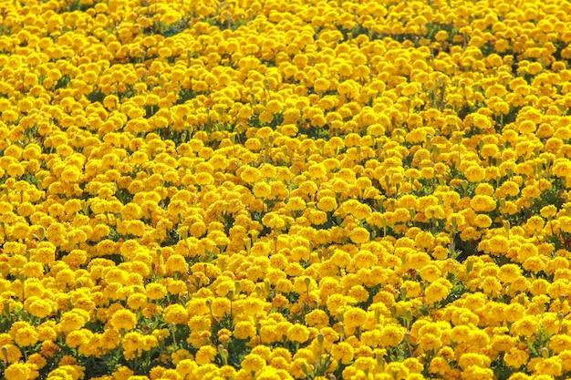 Большое разнообразие растущих желтых цветов