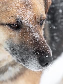 雪に覆われた冬を間近で見る大型犬、犬の肖像画