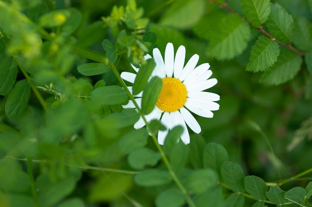 Большая белая рамка с желтым центром летний солнечный цветок