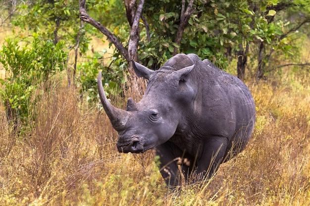 Парк большого белого носорога меру кения