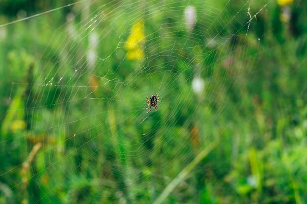 Большой желто-черный паук в пятнышках сидит на большой паутине в ожидании жертвы.