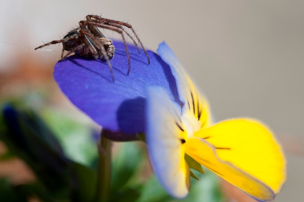 A larger spider on a flower