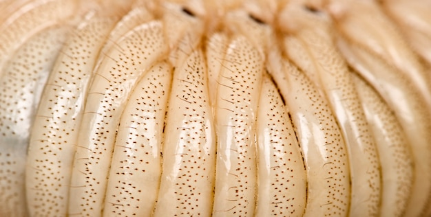 Larva of a hercules beetle - dynastes hercules - is the most famous and largest of the rhinoceros beetles.