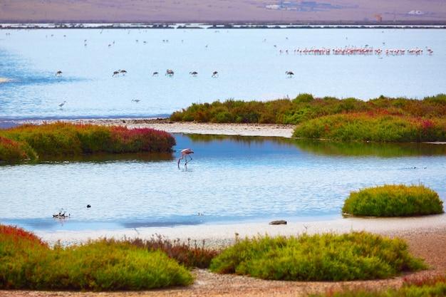 Las salinas cabo de gata almeria flamingos spain