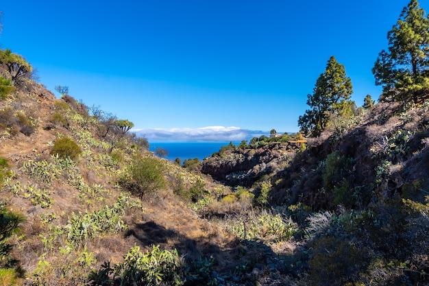 カナリア諸島、ラパルマ島の北にあるガラフィアの町のラストリシアストレイルとその美しいドラゴンツリー