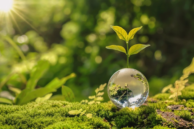 Lass globe ball with tree growing and green nature