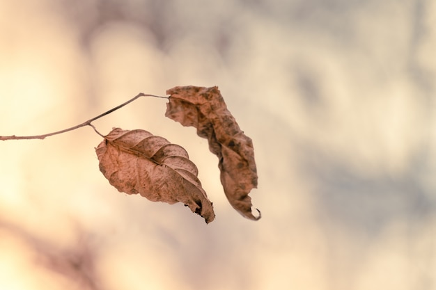 Last autumn leaves on a branch