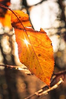 Последний осенний лист на ветке и солнечный свет