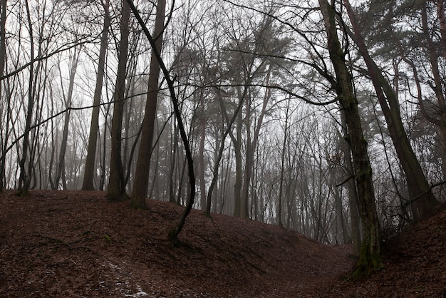 The last months of autumn and the beginning of winter in a mixed forest.