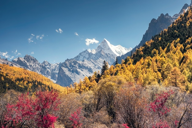 The last shangri-la with chana dorje mountain in autumn pine forest