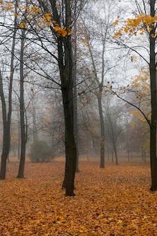 公園の晩秋、霧深い天気曇りの天気、木から落ちた葉