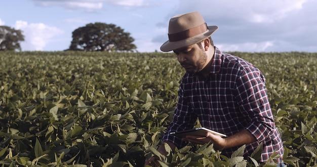 Фермер из латинской америки, работающий на плантациях сои, изучает развитие урожая на планшете.