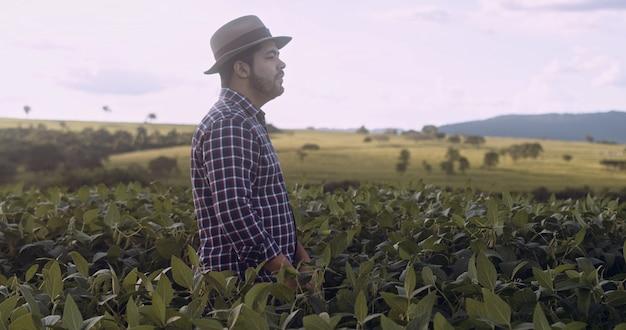 大豆作物をチェックするフィールドを歩いているラテンの農民