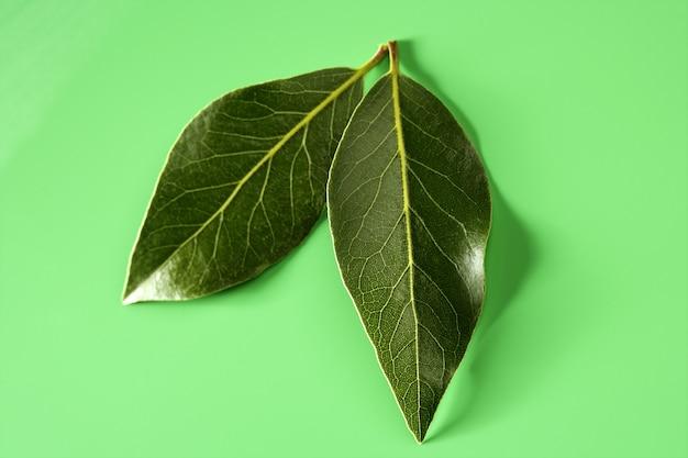 Laurel leaves on green studio