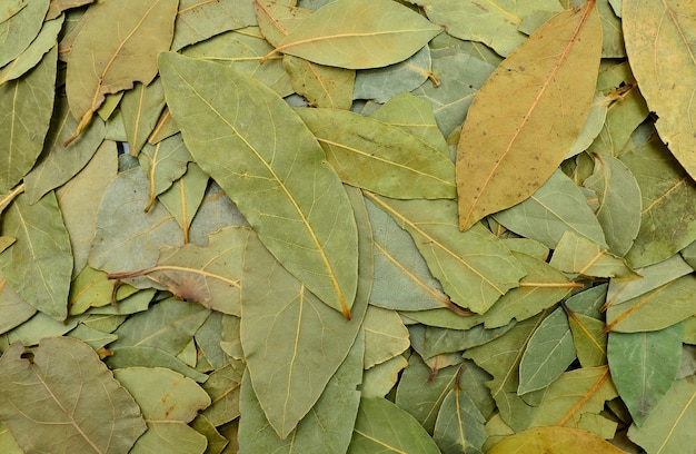 Laurel leaves texture