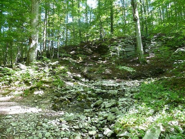 Лес происхождения lautertal баха источник громче