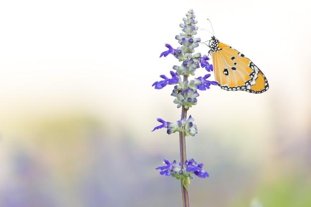 Лаванда и желтая бабочка с зелеными листьями на фоне природы и копией пространства слева