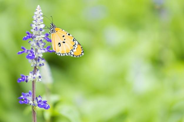 Лаванда и желтая бабочка с зелеными листьями на фоне природы и копией пространства справа