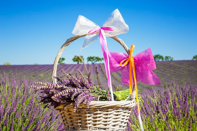 Lavender in a basket with lavender field in the background
