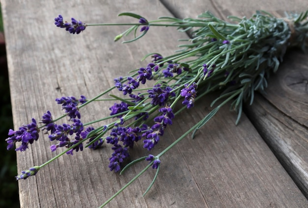 Lavender. a bouquet of lavender on the background of the garden. bright summer background