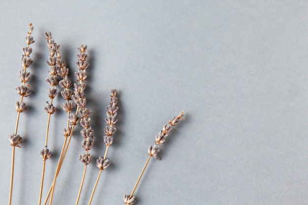 Lavender branches, copyspace. bottom location. minimalistic flat lay. horizontal.