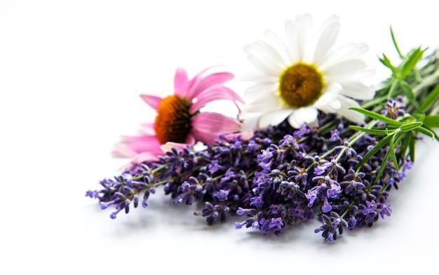 ラベンダー、エキナセア、カモミールの花