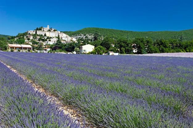 フランス、グリニャンのラベンダー畑